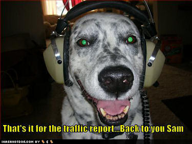 Here's Dog with the traffic report